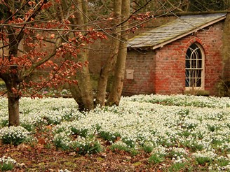 Lytham Hall Snowdrops Tour